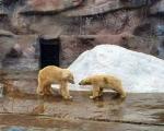В зоопарке Ижевска погибла медведица Аврора