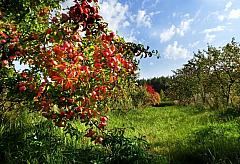 Удмуртский ботанический сад может стать площадкой экотуризма