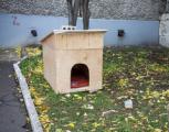 Ижевчанин построил во дворе будку для бездомной собаки
