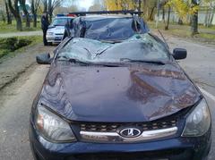 В Глазове дерево упало на движущийся автомобиль, пострадали два человек