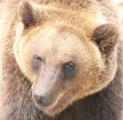 Бурый медведь в зоопарке Удмуртии вышел из спячки