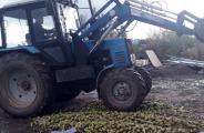 В Удмуртии раздавали 800 килограммов польских груш