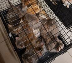 Зоозащитники спасли 13 кошек из ижевской квартиры