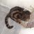 В Глазове спасатели достали из отверстия в стене застрявшего кота