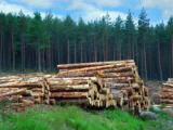Информационно-торговый портал о лесной отрасли