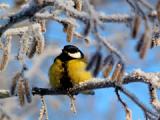 В Удмуртии обновились температурные рекорды