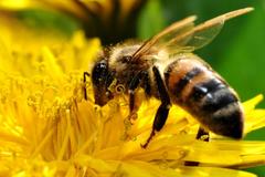 Пострадавшие пчеловоды Удмуртии получат компенсацию