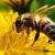 В Удмуртии снова зафиксирован случай массовой гибели пчел