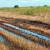 В Удмуртии проливные дожди уничтожили посевы на площади почти 25 тысяч гектаров