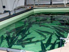 В Глазове появится рыбоводческий завод