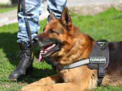 Служебная собака помогал раскрыть кражу в Глазовском районе