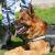 В Глазове служебная собака помогла раскрыть преступление