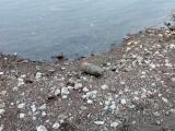 В Глазове на дамбе обнаружили артиллерийский снаряд