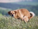 Бречалов оказался возмущен поведением собачников