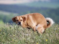 В Удмуртии установили штраф за выгул собак в неположенных местах