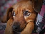 В Глазове хотят определиться с площадками для выгула собак