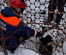 Глазовские спасатели помогли собаке, которая застряла в заборе
