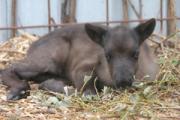 Посетители ижевского зоопарка насмерть закормили оленёнка