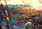 Теплая и сухая погода ожидается в Удмуртии 10 апреля