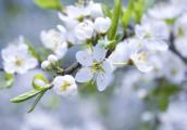 Глазовские школьники посадят яблоневый сад