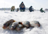 В Удмуртии оборудуют 25 мест для зимней рыбалки