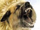 В Удмуртии бешеные животные покусали пять человек