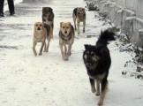 На отлов бродячих собак потратят почти полмиллиона рублей