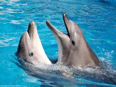 Состояние дельфинов в передвижном дельфинарии проверили ветеринары