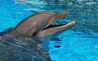 Главное управление ветеринарии Удмуртии проверит дельфинов из передвижного дельфинария