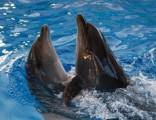 Украинские боевые дельфины послужат российскому флоту