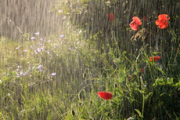 Умеренно-теплая погода с дождями ожидается в Удмуртии до конца недели