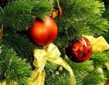 Продажа новогодних елок в Глазове начнется 25 декабря