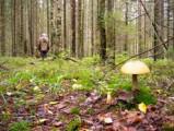 В Удмуртии с начала апреля в лесах заблудилось уже более 70 человек