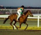 Казанский ипподром лечит больных детей с помощью лошадей