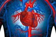 Основной причиной смертности жителей Удмуртии являются болезни кровообращения