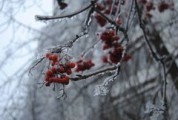 В Удмуртии вновь может пройти ледяной дождь