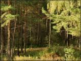 Миллион хвойных деревьев планируют высадить в Удмуртии