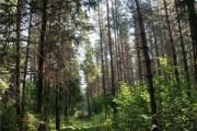 Закон о «лесной амнистии» принят в первом чтении
