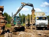 Финляндия импортирует 85% леса из России