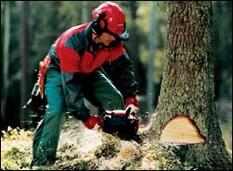 В Удмуртии группа «черных лесорубов» вырубила леса на 3 миллиона рублей