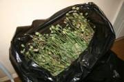 В Глазове задержали женщину, у которой изъяли 500 грамм маковой соломки