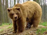 В Удмуртии медведь напал на егеря
