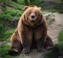 В республику пришла зима: медведи в зоопарке Удмуртии впали в спячку