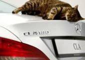 В рекламе автомобиля Мерседес поучаствовал кот