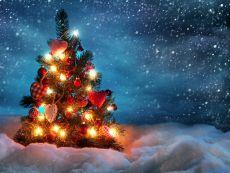 Новогоднюю елку в Ижевске откроют 27 декабря 2014 года