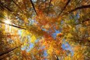8 октября в Удмуртию придет похолодание