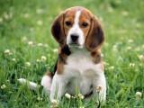 В Глазове появятся площадки для выгула собак