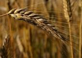 23 района Удмуртской Республики приступили к уборке урожая