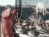 К Путину обратились рыбаки России.