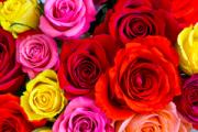 В Удмуртии собираются вырастить миллион роз